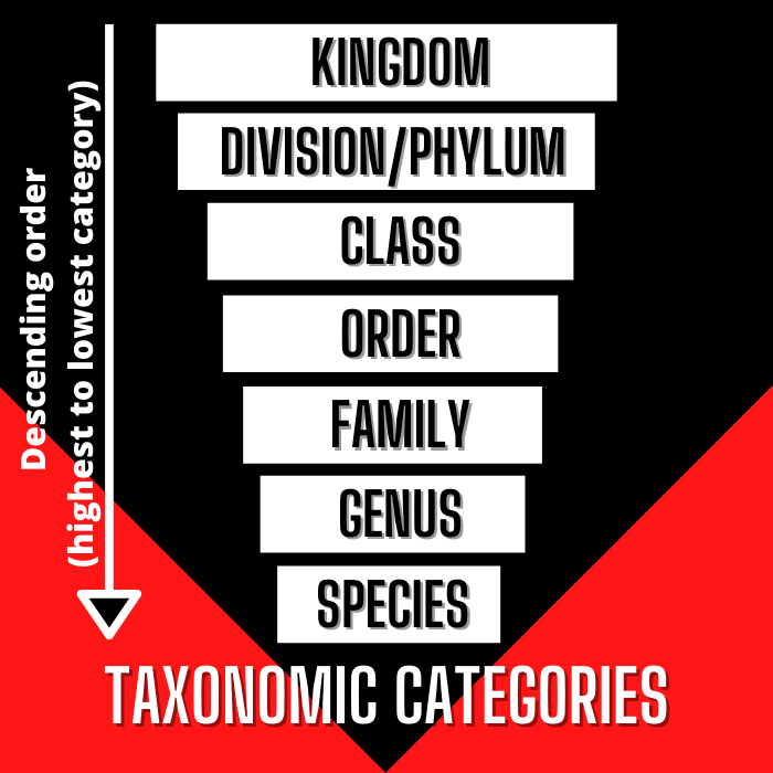 sequence of taxonomic categories and levels of classification in order
