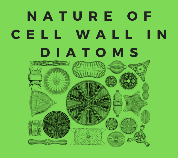 nature of cell wall in diatoms